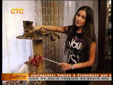 Бенгальские котята, бенгальские кошки питомник Malakhovka.
