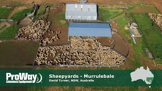 ProWay Sheepyards and Shearing Shed, Murrulebale NSW