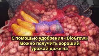 видео Калимагнезия (калимаг) как удобрение: применение, состав