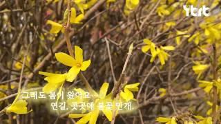[영상소식]연변 곳곳에 봄꽃 만개|코로나 뚫고 봄이 왔…