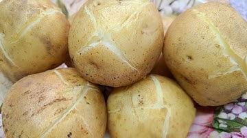 보슬보슬 쫄깃하게 감자 삶는방법,감자 맛있게 삶는방법.