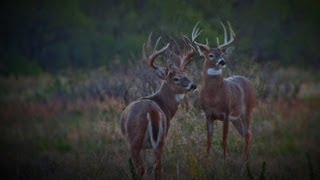 one of largest bucks ever taken with bow and arrow on camera 234 gross full draw adventutres