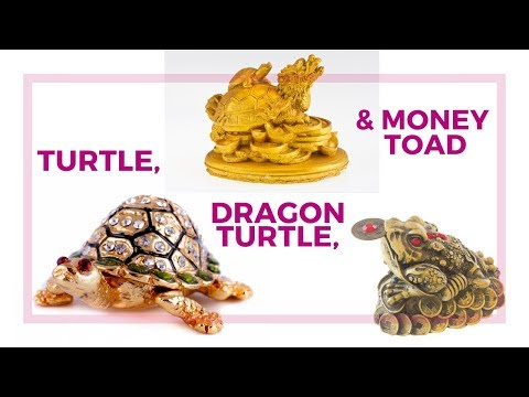 Turtle, Dragon Turtle And Money Frog Or The Three Legged Toad In Feng Shui