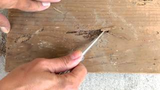 Drywood Termite Damage and Pellets