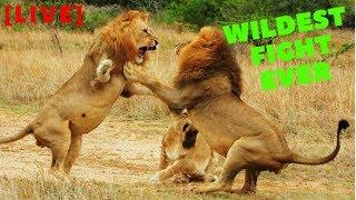[LIVE] Wild Animals Fight | Survival Battle | African Animals Attack Lion vs Buffalo vs Crocodile