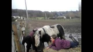 Riding Horses Is Cruel and Abusive