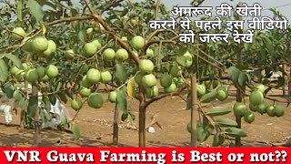 About VNR BIHI Guava Farming   Fruits Setting   Baging Process   Fruit Quality & Keeping Quality