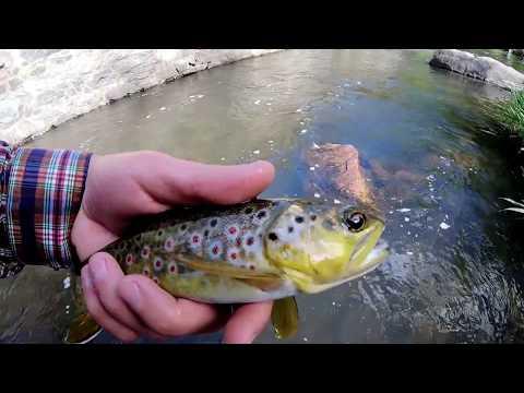 Fly Fishing Bear Creek, Colorado