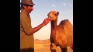 Funny Videos Compilation 2015. Fail compilation, funny pranks, funny animal, comedy