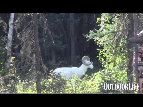 Long-Range Archery Shot: 100 Yards With a Recurve Bow