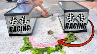 extreme-tortoise-race-who-will-win