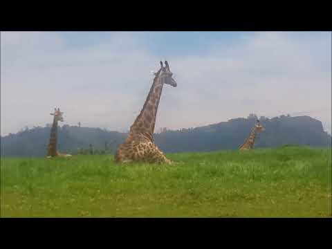 Safari Trip in Durban, South Africa