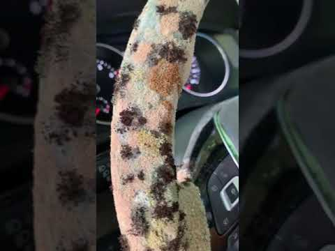 MOLD in a Volkswagen Tiguan 2018 (Sunroof leaking)