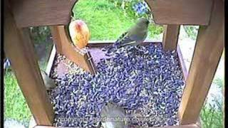 Busy Bird Table