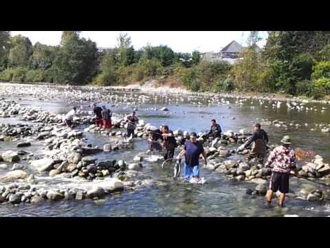 Capilano River Coho Salmon Indian Reserve Massacre North Vancouver British Columbia