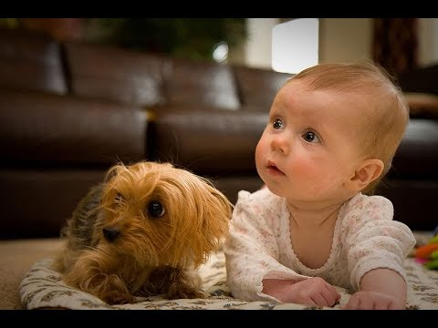Cute Overload Puppies and Babies Playing Together Videos Compilation