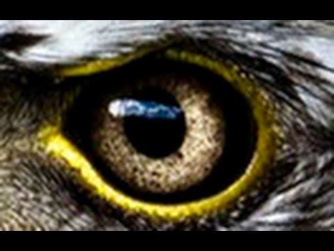 Amazing Evolution of Eyes(Nature Documentary)HD