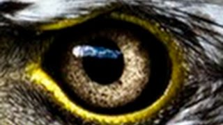 Amazing Evolution of Eyes(Nature Documentary)HD