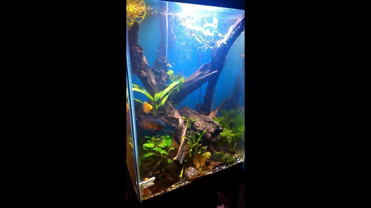 55 planted column tank youtube for Column fish tank