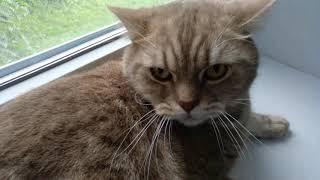 Взорвал интернет! Злой Кот разговаривает, говорит пошёл на мама МАаа :(( Вы помните это?