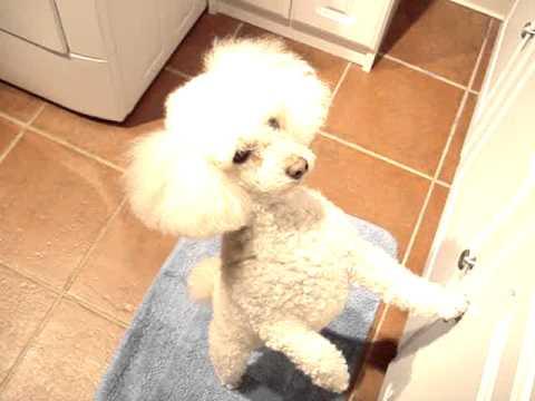 dog-demanding-fresh-water--nikki--little-loka