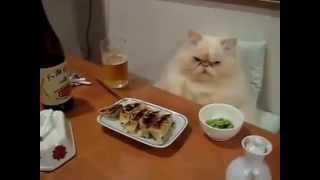Новое видео. Смешные кошки. Смешное видео, смешные животные, приколы, ржака до слез, я плакал.