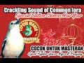 Sirtu Cipoh Fighter Gacor Ngegas Ngeroll Panjang Cocok Untuk Masteran  Mp3 - Mp4 Download