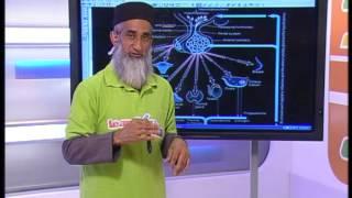 Endocrine System & Homeostasis