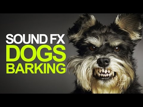 DOG BARKING  Sound Effect High Quality