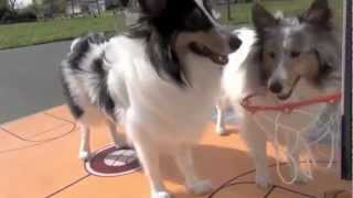 Dogs Play Basketball- Canine All-star Team