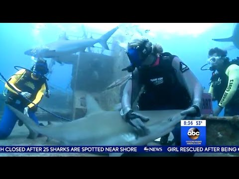 Ginger Zee - Putting A Shark Into Hypnotic State  (Tonic Immobility) GMA