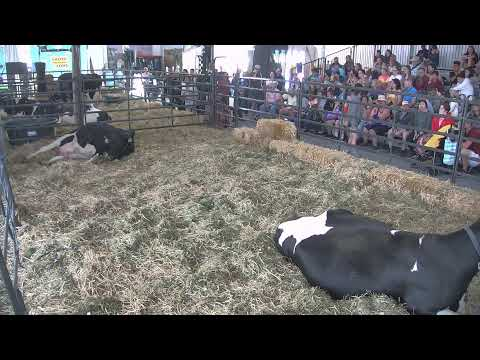 New York State Fair Dairy Birthing Center Live Stream