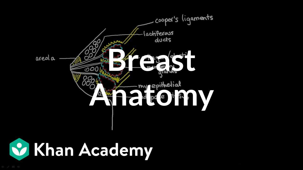 Breast Anatomy - YouTube