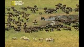 زامبيزي مصدر الحياه
