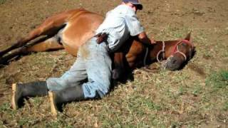 Laying Down a Horse in Monteverde Costa Rica Marvin with Gladiator 001.avi