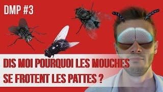 Dis-moi pourquoi les mouches se frottent les pattes ? DMP #3