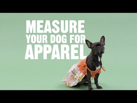 How To Measure Your Dog For Clothing | Chewy