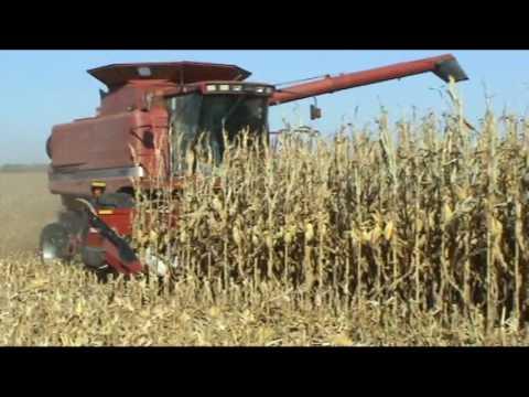 Calmer Corn Heads Test Head in Action