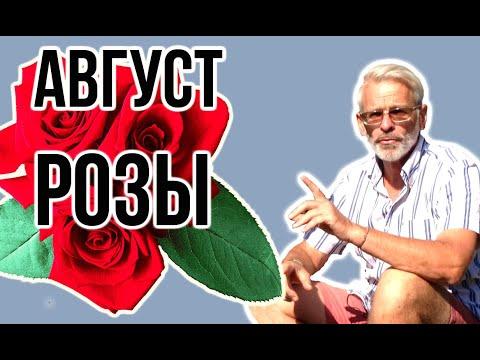 Вопрос: Мускатные розы – какие особенности в уходе за ними?