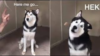 Fail Animals ⛔❌🚫 Funny and Cute Animals Video Compilation 2019