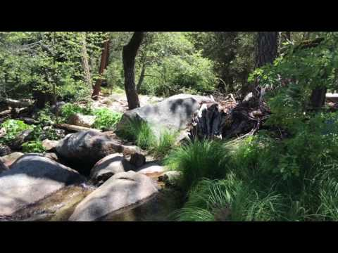Fly Fishing Yosemite for Trout