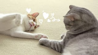 Baby Kitten Needs Affection and Love Badly! (ENG SUB)