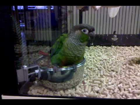 Dancing Parrot Petsmart Youtube