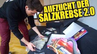 START DER SALZKREBSE 2.0