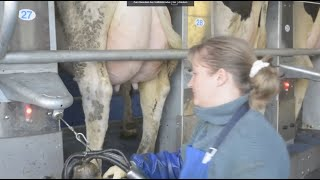 Ein Stall zieht um - Vom LPG-Stall zum modernen Melkzentrum