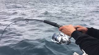 Catching king Fish in Melbourne's Rip