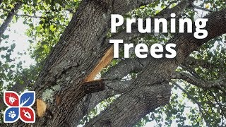 Do My Own Lawn Care - Pruning Trees