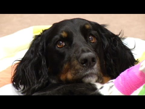 Money Savers: pet insurance