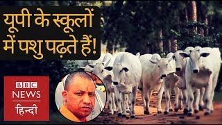Uttar Pradesh: Animals in primary school, students on road (BBC Hindi)