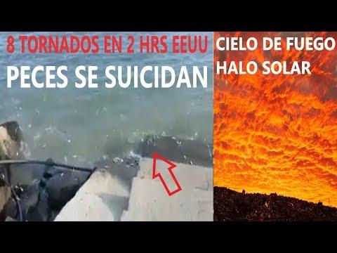 Alerta Peces se Salen del Mar / Cielo Rojo Halo Solar / 8 Tornados en EEUU